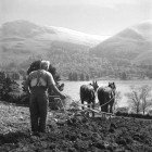 Farmer-Geordie-Lightfoot-with-his-horses-on-field-above-Loweswater2
