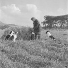 farmer-and-his-dogs